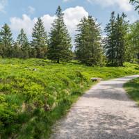breite Wanderwege am Ruhestein