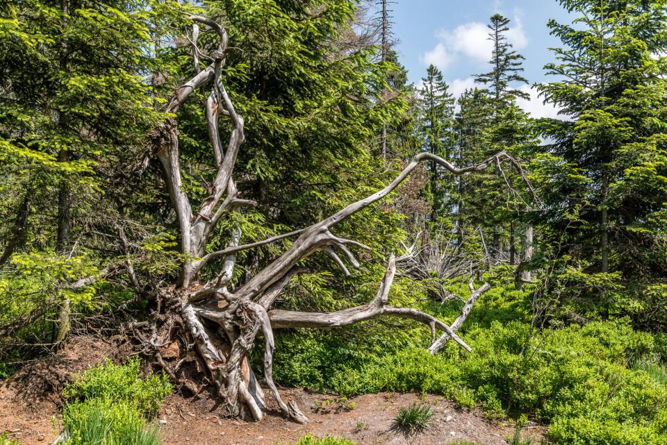 natürlicher Skulpturenpark