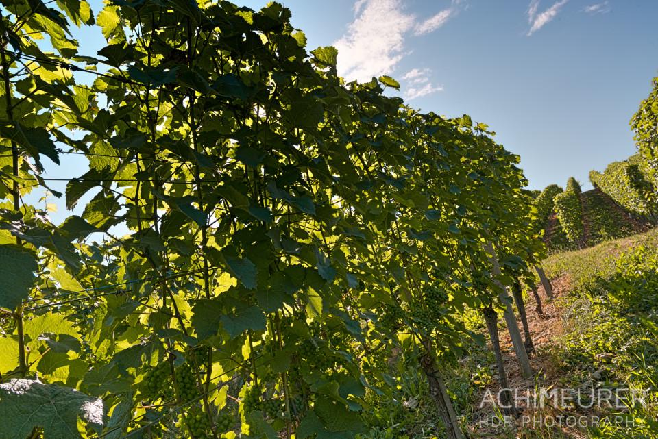 Weingärten im Schwarzwald