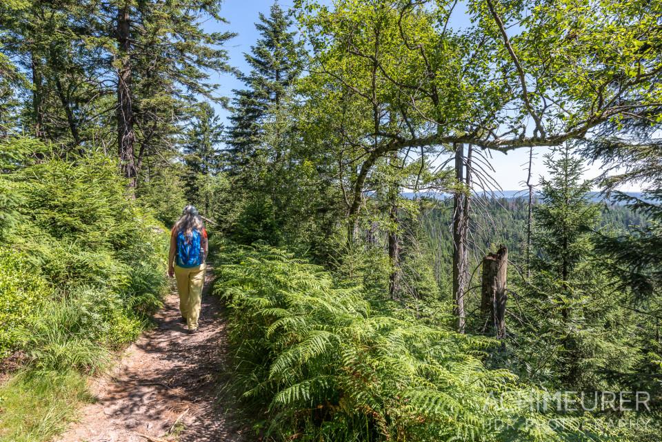 Wandern Wilder See Ruhestein Schwarzwald