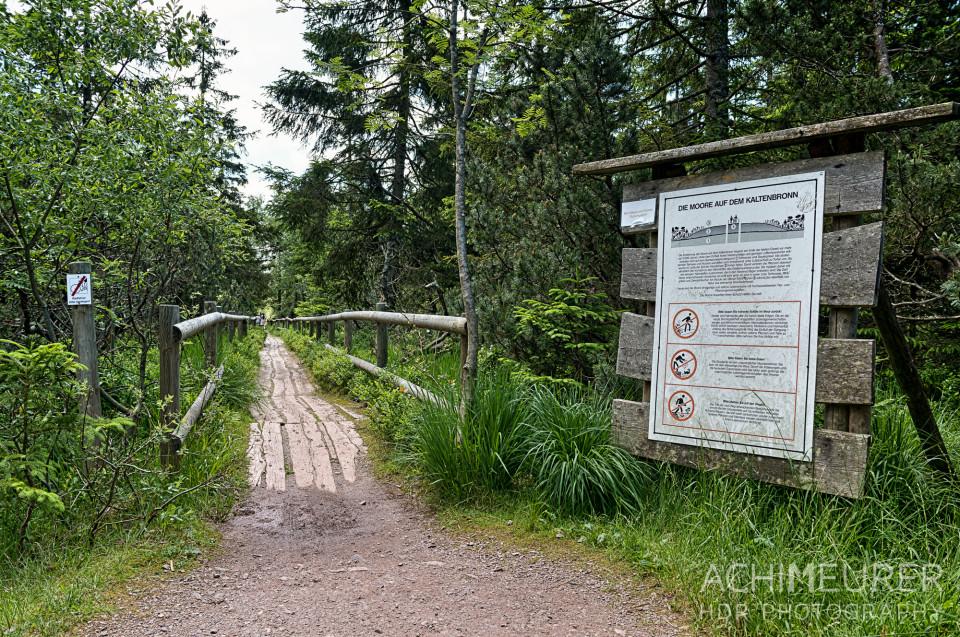 Woche7 Schwarzwald Walz
