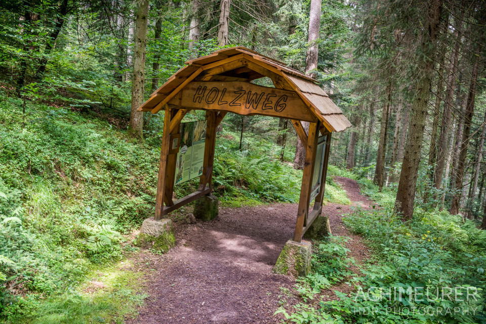 Wandern auf dem Holzweg