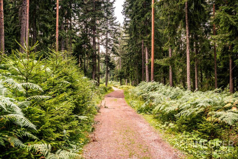 Wandern am Stöckerkopf