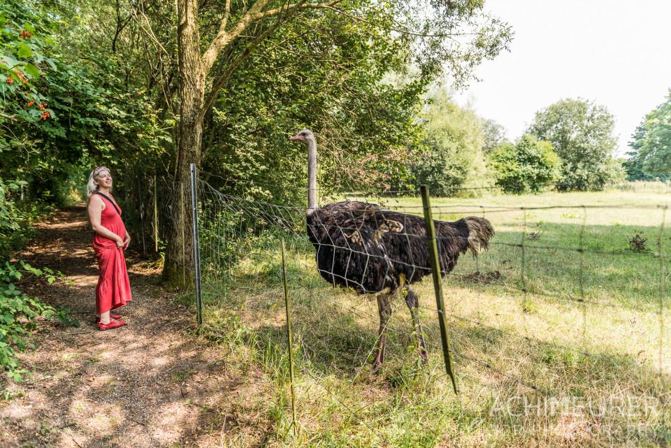 Kamel & Straussen Farm