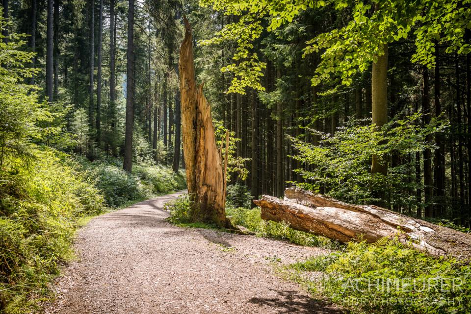 Wanderwege im Sankenbachtal