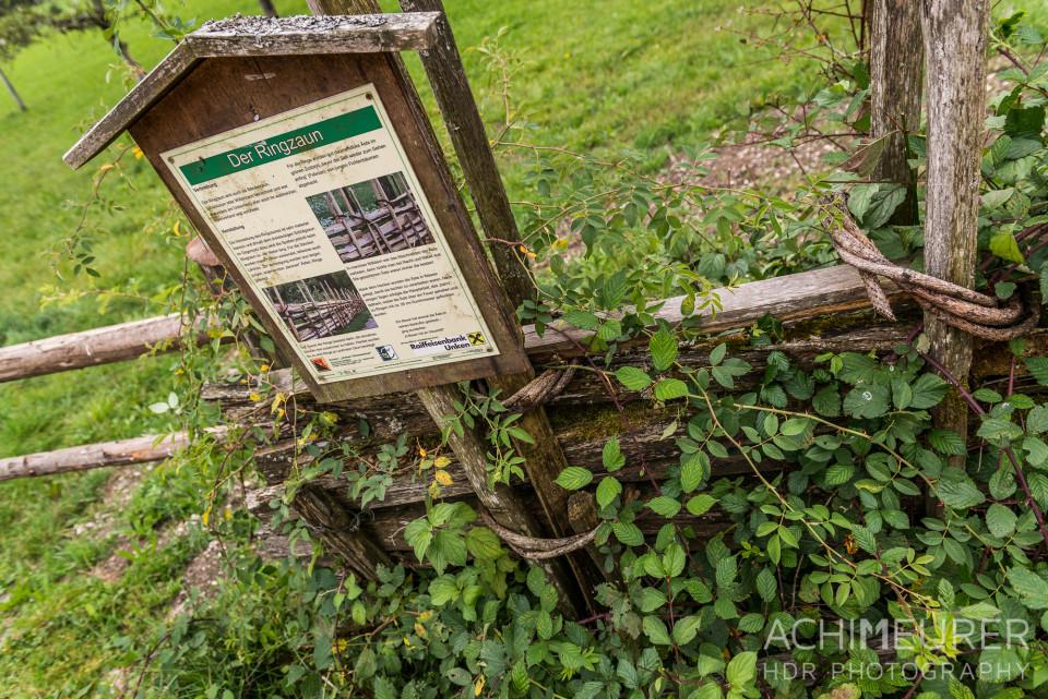 Saalachtal-Unken-Zaunweg_1406