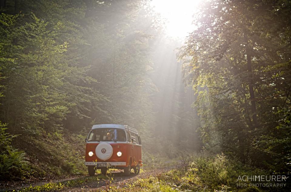 Die ersten Sonnenstrahlen im Wald