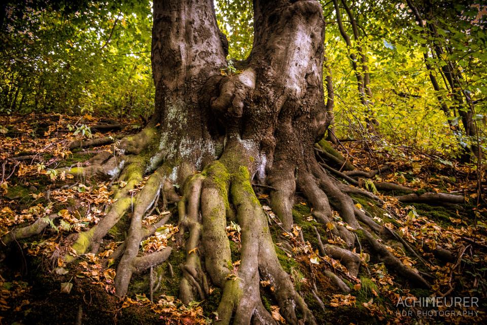 Wald-Zwillinge