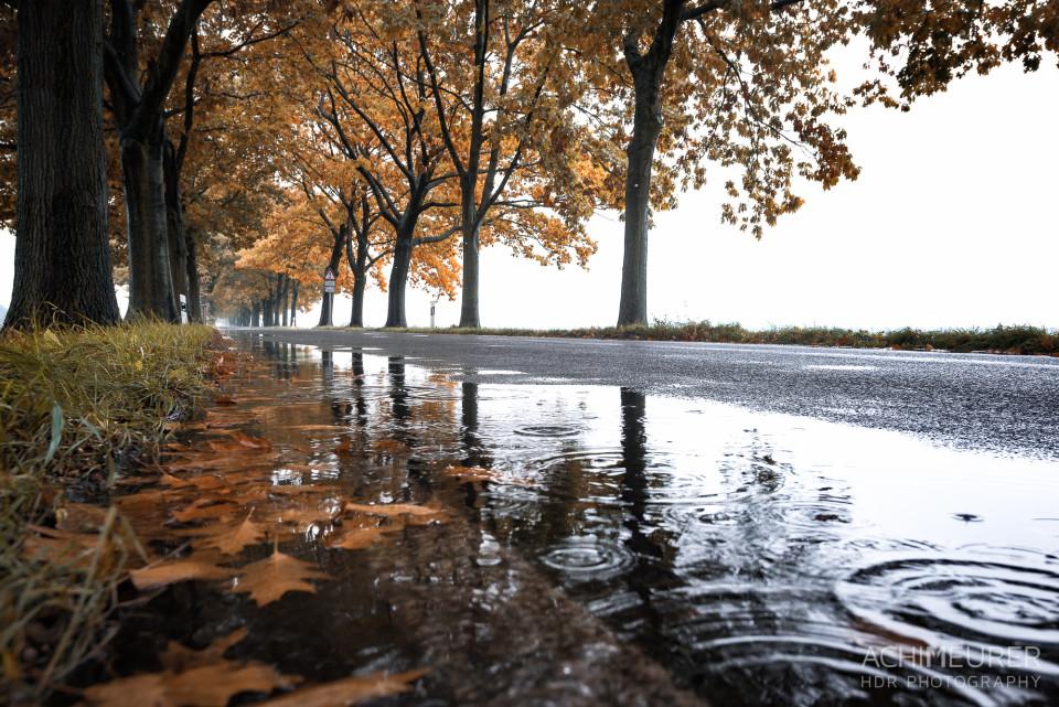 Herbststimmung an einem Regentag