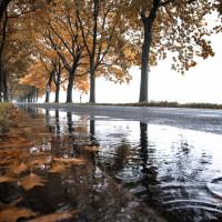 Regenstimmung in Sachsen