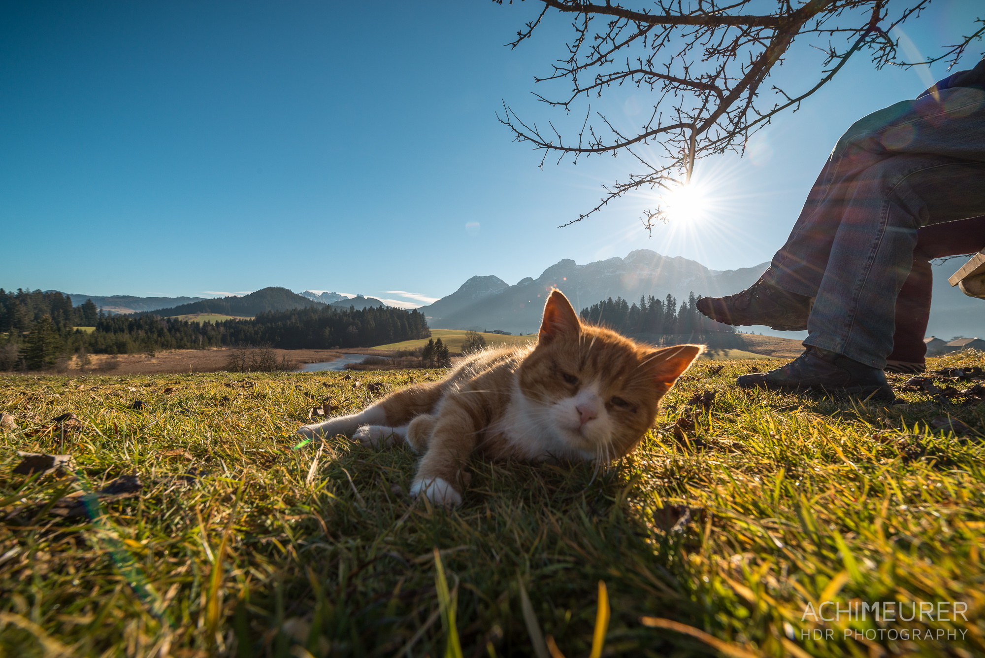 Cat Content in Abtenau