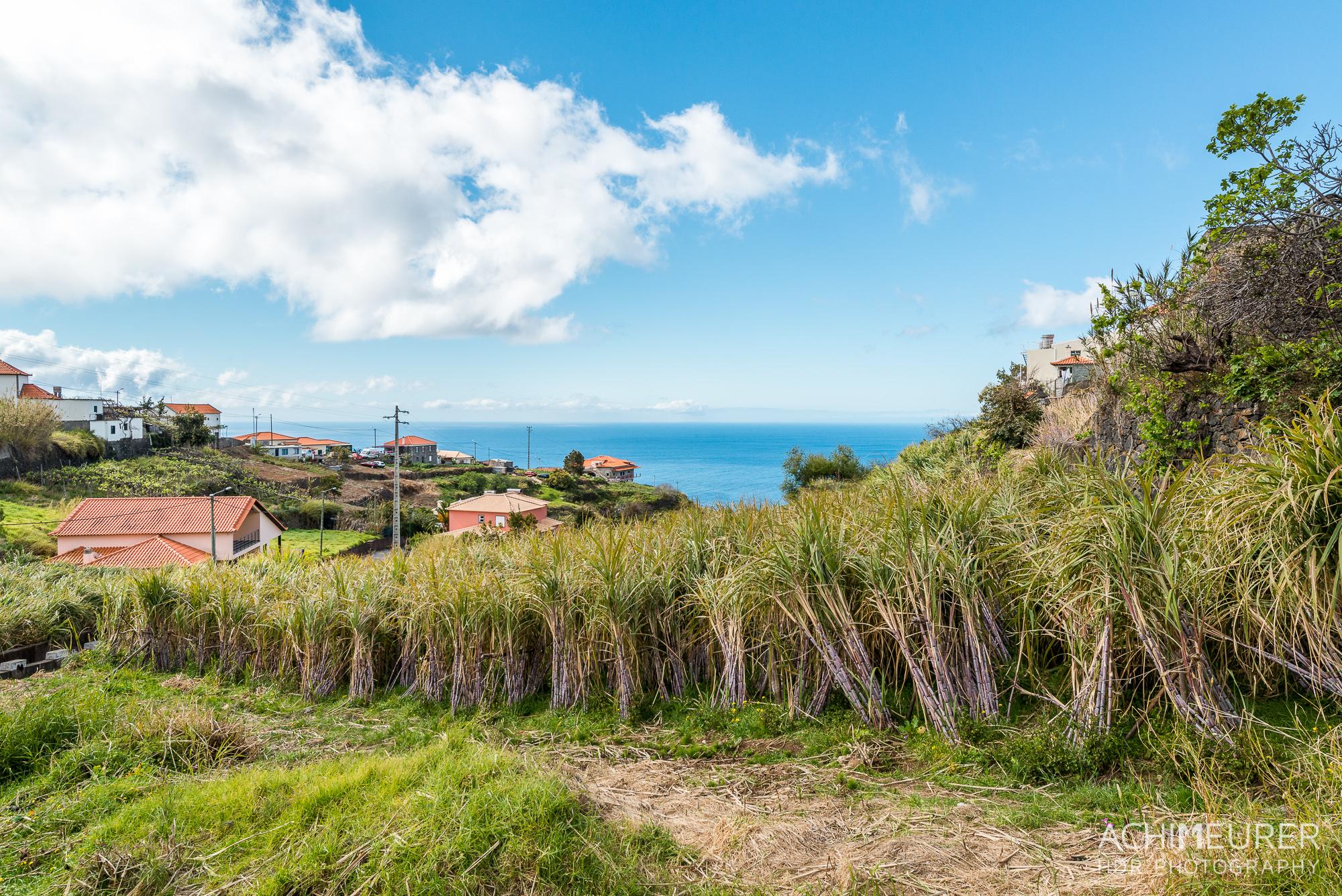Madeira_6780