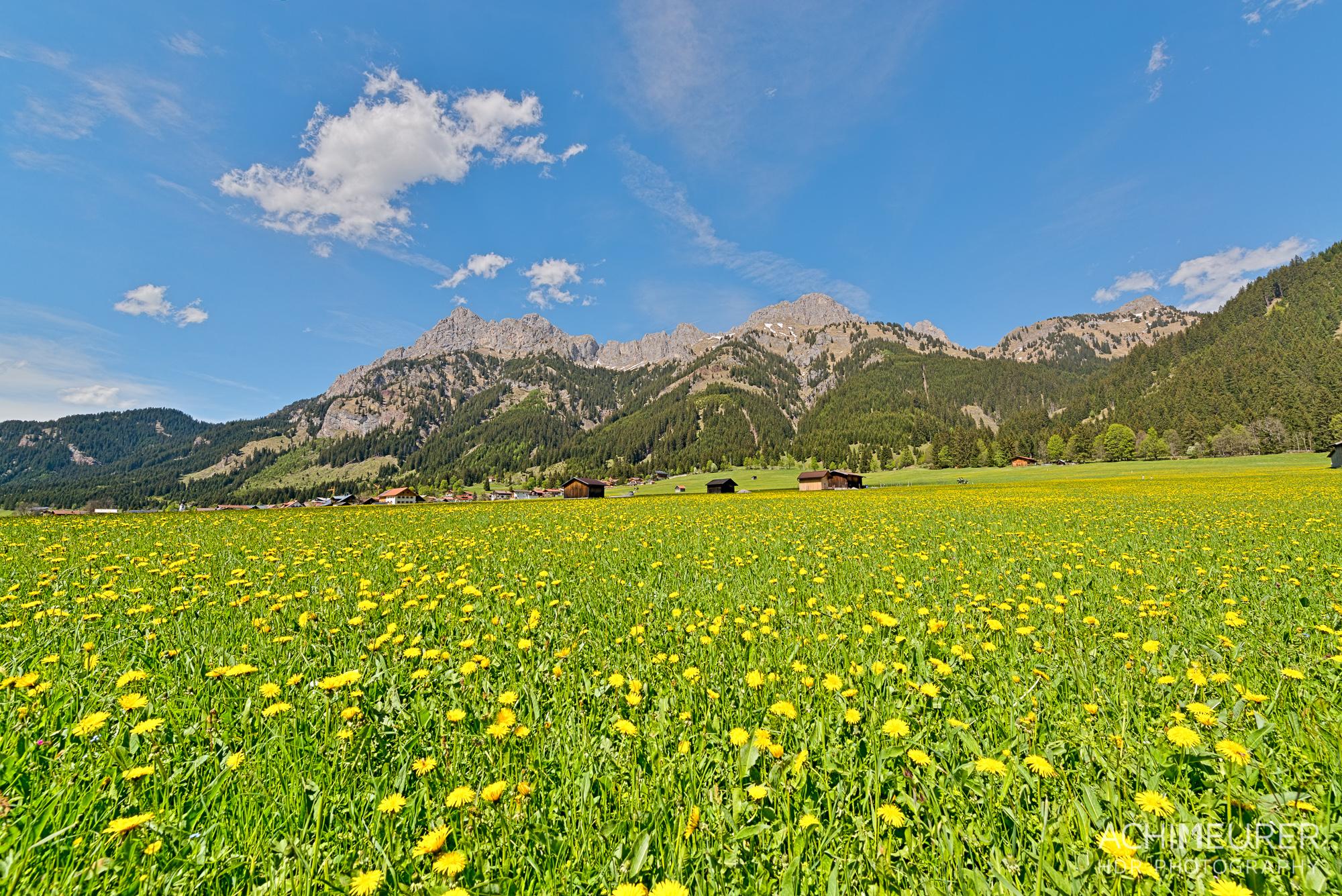 Tannheimer-Tal-Fruehling-Landschaft-Wiese-Blumen_1967_6_5_4_3_HDR