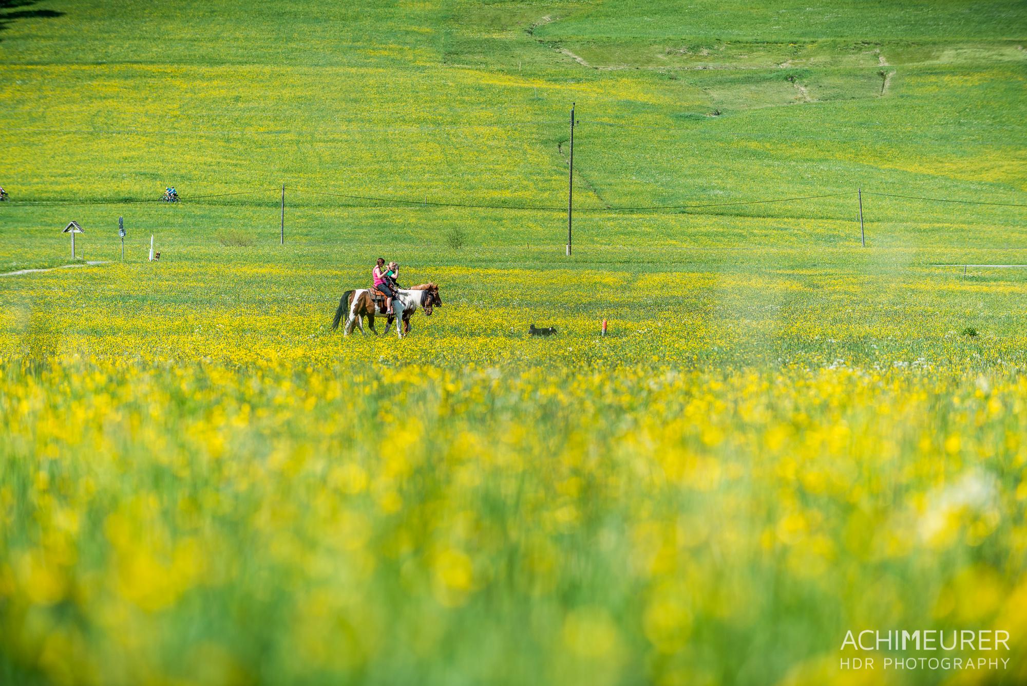 Tannheimer-Tal-Fruehling-Landschaft-Wiese-Blumen_2034