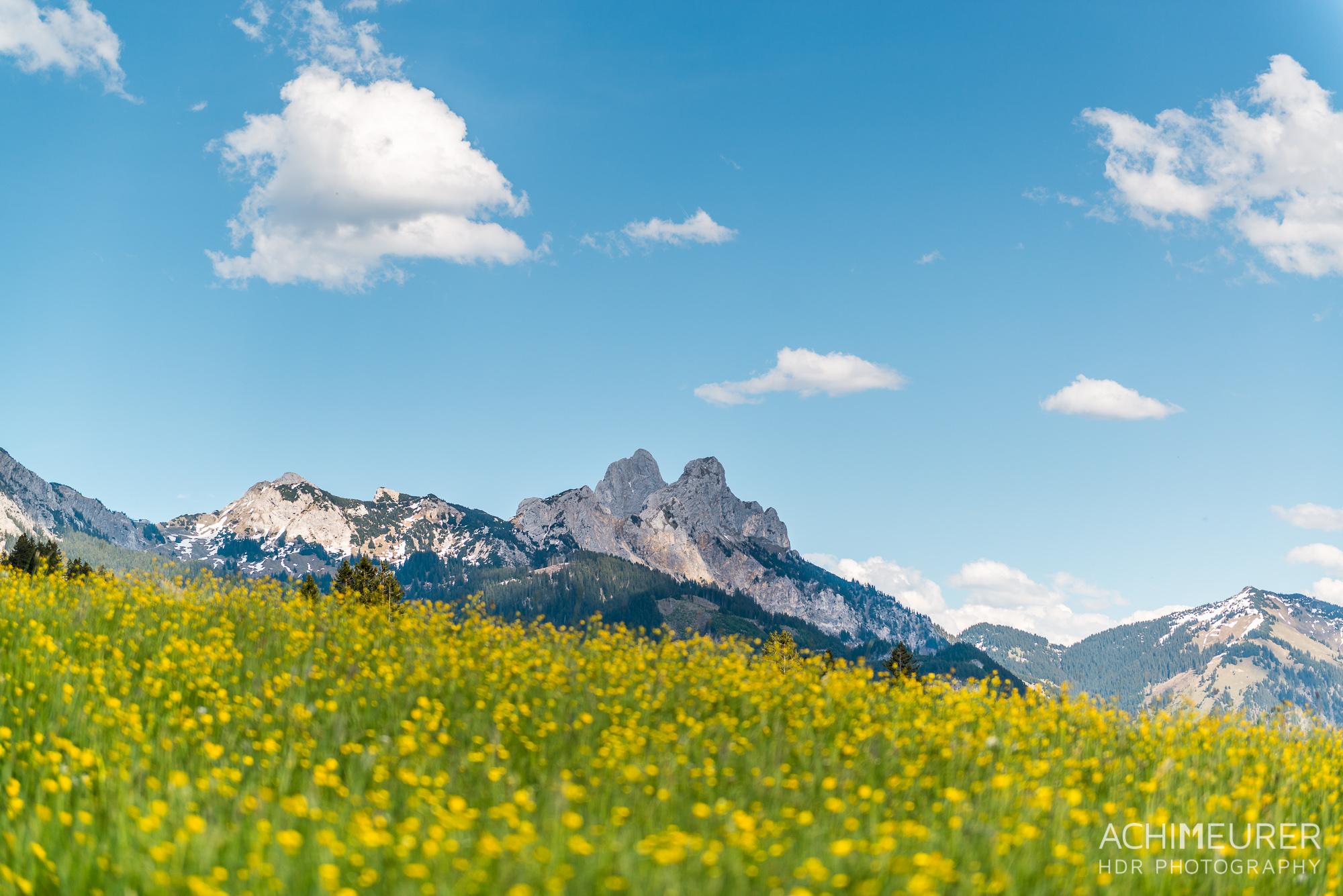 Tannheimer-Tal-Fruehling-Landschaft-Wiese-Blumen_2057