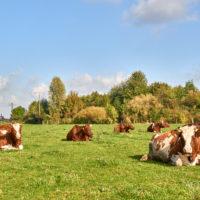 Der Demeter-Bauernhof im Klostergut Heiningen mit seinen Tieren #nHavo by AchimMeurer.com                     .