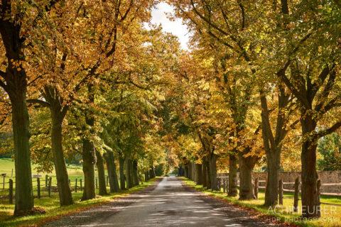 Baum-Alleen, Herbst-Landschaft #nhavo by AchimMeurer.com .