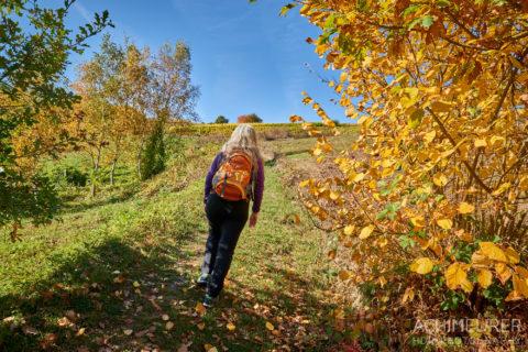 Der Rhein-Burgen-Wanderweg im Herbst by AchimMeurer.com .