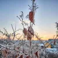 Sonnenaufgang an der Ruhr bei Hattingen im Ruhrgebiet im Winter by AchimMeurer.com .