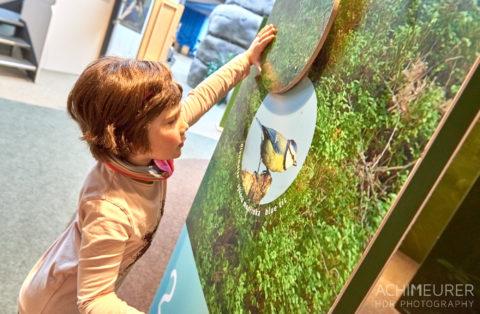 Auf Entdeckungstour im Nationalparkzentrum in Bad Schandau by AchimMeurer.com .
