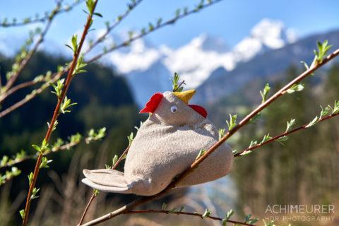 Frühling im Saalachtal im Salzburgerland