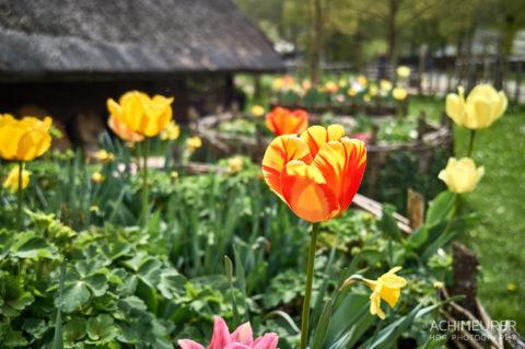 Blumen im Frühling in Mattsee im Salzburgerland, Österreich by Achim Meurer.