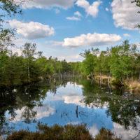 Heidebloggertreffen in Bispingen in der Lüneburger Heide by AchimMeurer.com .
