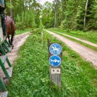 Kutschfahrt durch die Lüneburgerheide bei Bispingen by AchimMeurer.com .