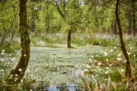 Die faszinierende Natur der Lüneburgerheide bei Bispingen by AchimMeurer.com .