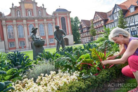 Woche 113 und 114: Projektarbeit und Wolfenbüttel