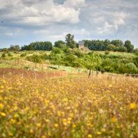 Kaiserpfalz Werla - Nördliches Harzvorland by AchimMeurer.com                     .