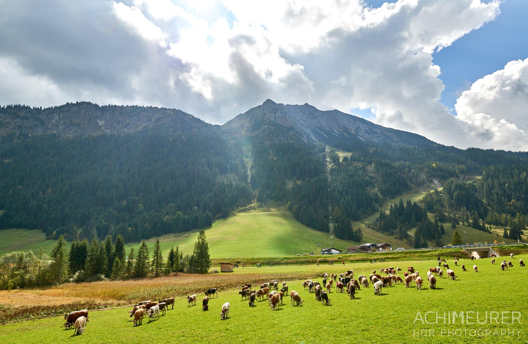 Almabtrieb in Nesselwängle, Tannheimertal, Tirol Österreich by AchimMeurer.com .