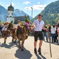 Almabtrieb Tannheim, Tannheimertal, Tirol, Österreich by AchimMeurer.com                     .