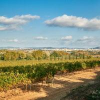Umgebung von Vilafranca in Katalonien by AchimMeurer.com .