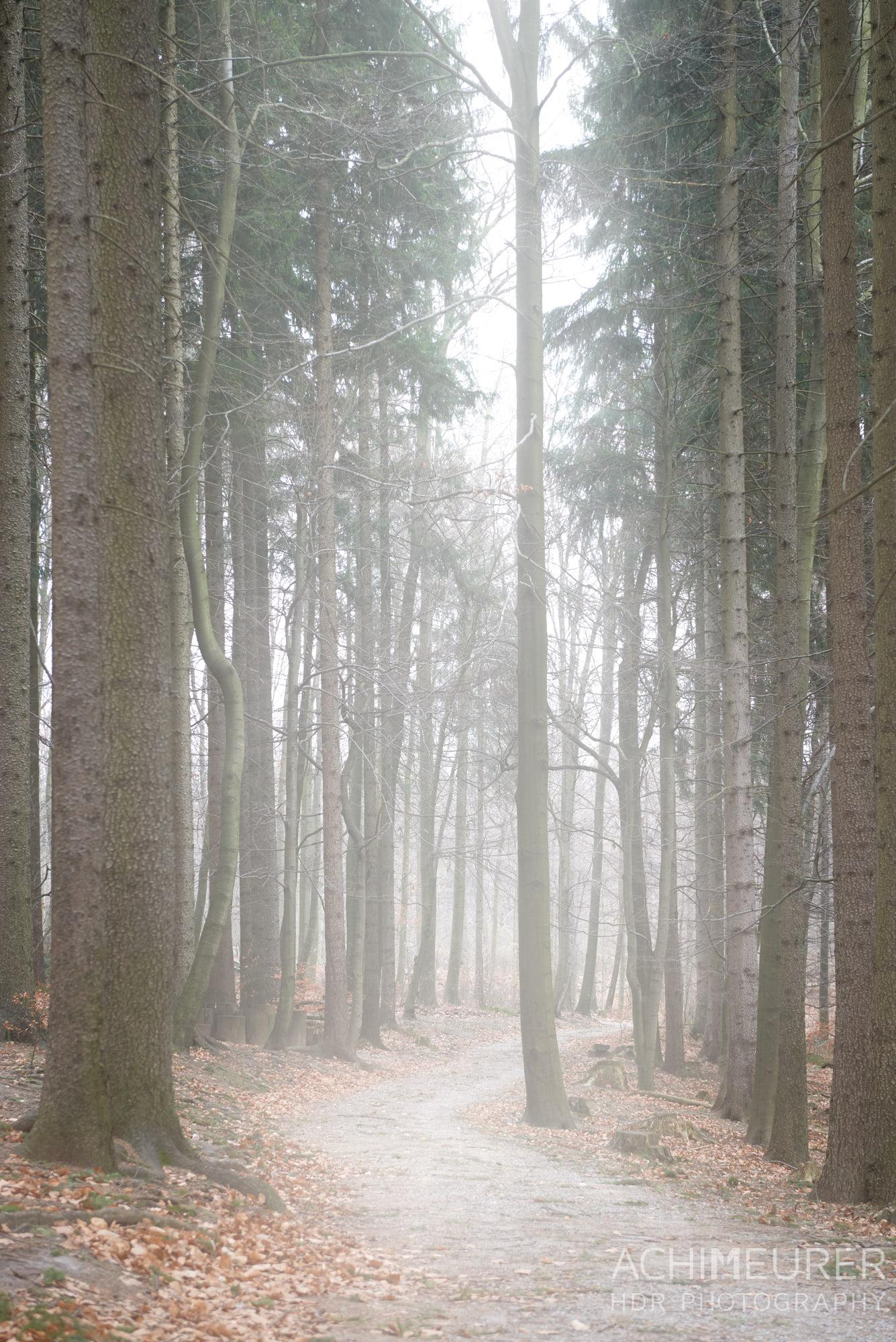 Mystische Nebelstimmung im Wald, Sächsische Schweiz by AchimMeurer.com.