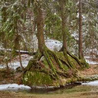 Winterimpressionen im Kirnitzschtal, Sächsische Schweiz by AchimMeurer.com.