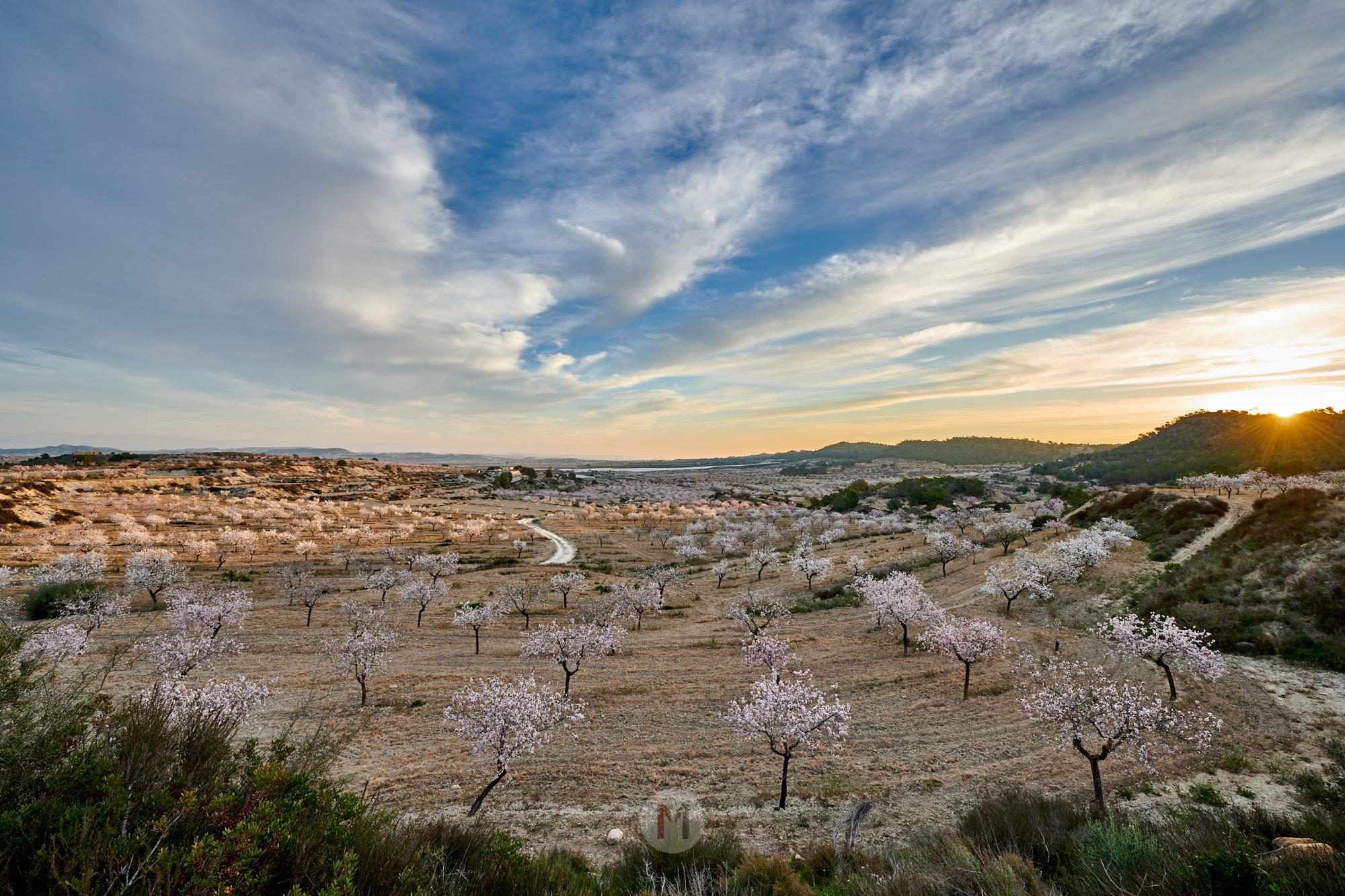 Zum Sonnenaufgang bei der Mandelblüte an der Costa Brava, Spanien by ACHIM MEURER.