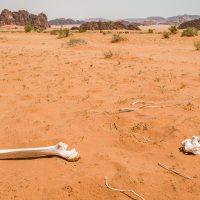 Wüste Wadi Rum in Jordanien